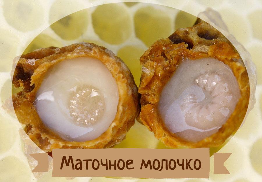 маточное молочко продукт пчеловодства